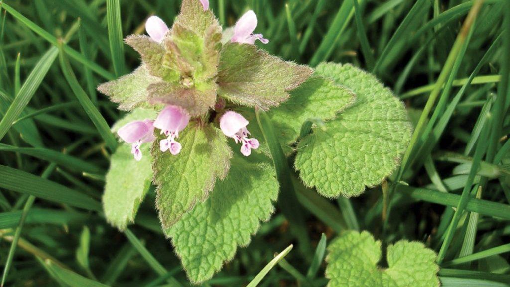 5 Tips to Enhance Broadleaf Weed Control
