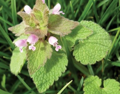 5 Tips to Enhance Broadleaf Weed Control