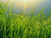 Tips for Growing Green Lawns