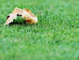Aerating and Overseeding Your Lawn In Fall