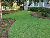 Zoysiagrass for Florida Lawns