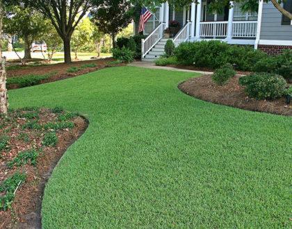Zoysiagrass for Florida Lawns